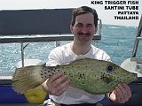 KingTriggerFish